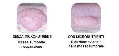 Massa tumorale in espansione e ridotta con l'apporto di micronutrienti