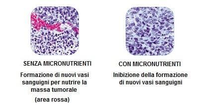angiogenesi prima e dopo