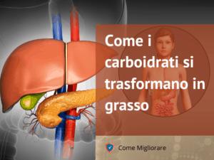Come i carboidrati si trasformano in grasso 2 -