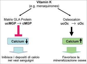 vitamina-k-effetti-ossa-salute-vascolare